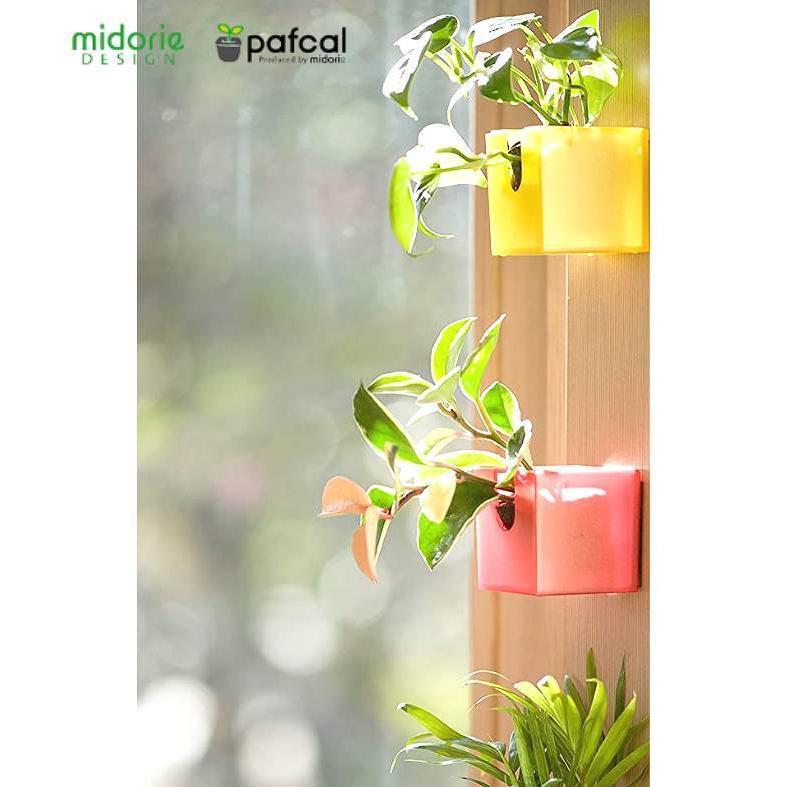 ミドリエデザイン KOMIDORI(ミドリエデザイン最小サイズ)コミドリ3個セット バリエーション有|green-planet|05