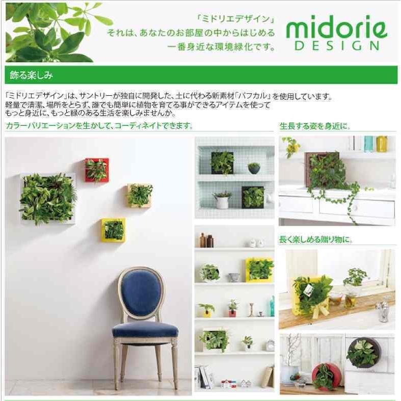 ミドリエデザイン KOMIDORI(ミドリエデザイン最小サイズ)コミドリ3個セット バリエーション有|green-planet|07