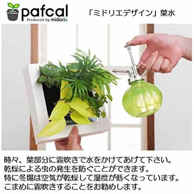 ミドリエデザイン KOMIDORI(ミドリエデザイン最小サイズ)コミドリ3個セット バリエーション有|green-planet|09