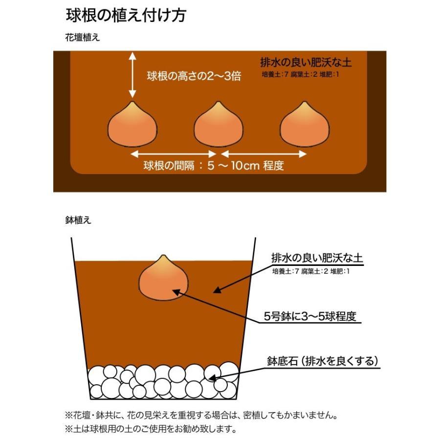 の 方 チュウリップ 植え 球根のダブルデッカーコンテナ