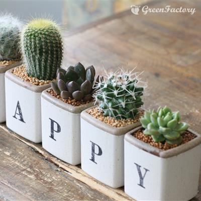 サボテン多肉植物5個セット HAPPYバージョン|greenfactory|02