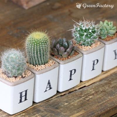 サボテン多肉植物5個セット HAPPYバージョン|greenfactory|03