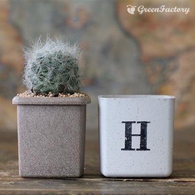 サボテン多肉植物5個セット HAPPYバージョン|greenfactory|05