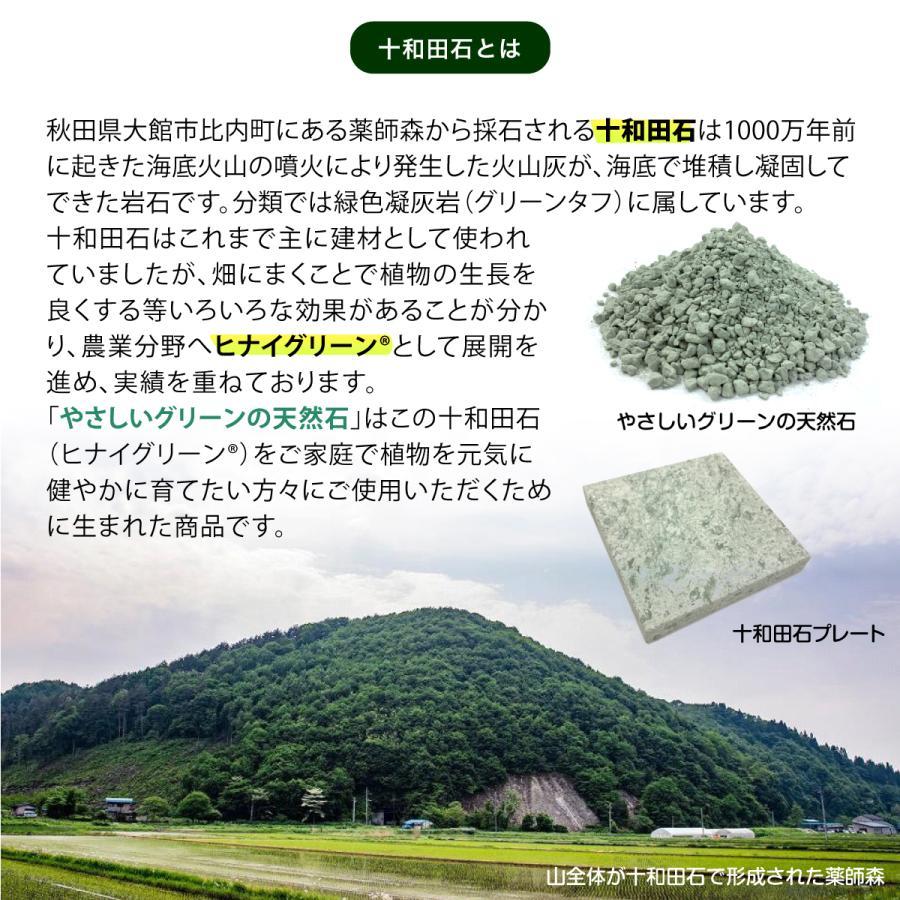 やさしいグリーンの天然石(450g)|greentuff|07