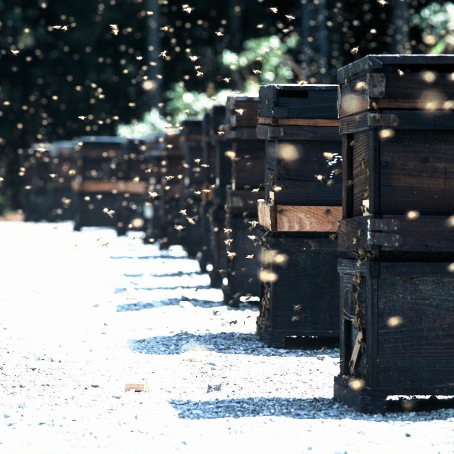 母の日ギフト 送料無料 国産純粋巣みつ 純粋蜂蜜 健康 ギフト 巣蜜|hachinoko|11