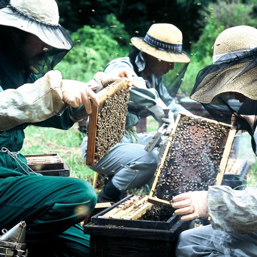 母の日ギフト 送料無料 国産純粋巣みつ 純粋蜂蜜 健康 ギフト 巣蜜|hachinoko|10