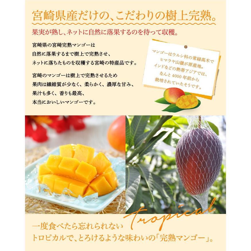 マンゴー みやざき完熟マンゴー 赤秀 4Lサイズ 510g以上×3玉 宮崎県産 JA宮崎経済連 ギフト お取り寄せグルメ 母の日 父の日|hachiya-fruits|05