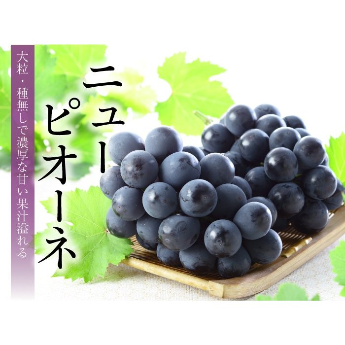 ぶどう ニューピオーネ 赤秀 約500g×2房 岡山県産 JAおかやま 葡萄 ブドウ hachiya-fruits 05