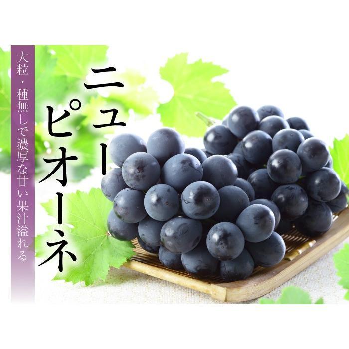 ぶどう ニューピオーネ 青秀 500g×2房 岡山県産 JAおかやま 葡萄 ブドウ|hachiya-fruits|03