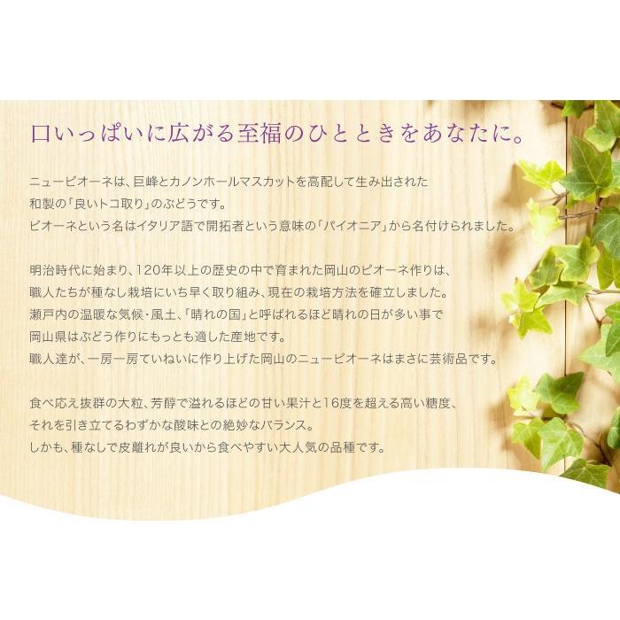ぶどう ニューピオーネ 青秀 500g×2房 岡山県産 JAおかやま 葡萄 ブドウ|hachiya-fruits|06