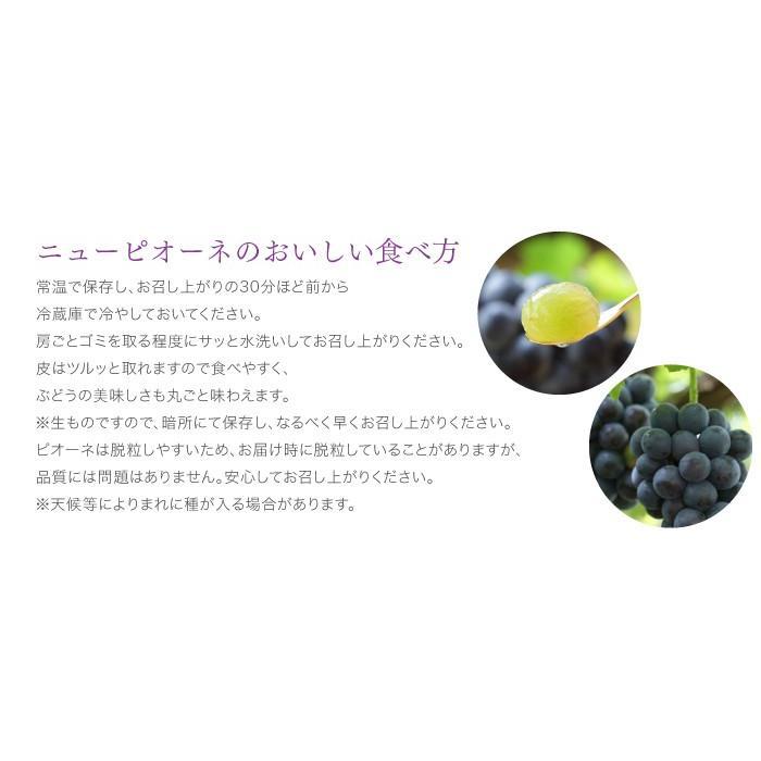 ぶどう ニューピオーネ 青秀 500g×2房 岡山県産 JAおかやま 葡萄 ブドウ|hachiya-fruits|07