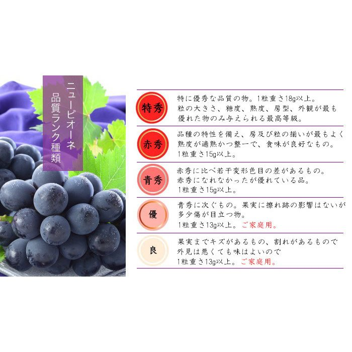 ぶどう ニューピオーネ 青秀 500g×2房 岡山県産 JAおかやま 葡萄 ブドウ|hachiya-fruits|08