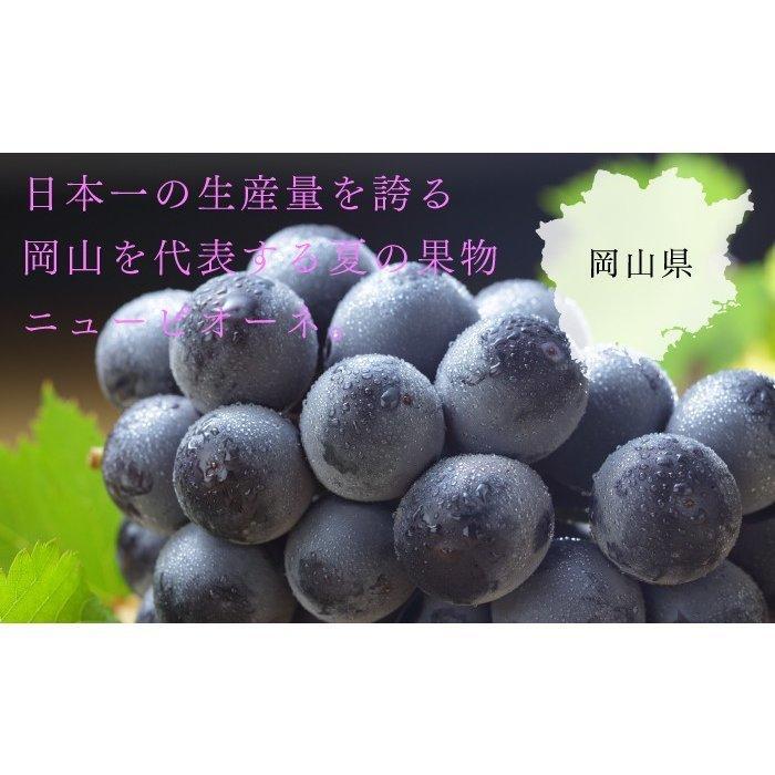 ぶどう ニューピオーネ 優品 500g×2房 岡山県産 JAおかやま 葡萄 ブドウ|hachiya-fruits|04