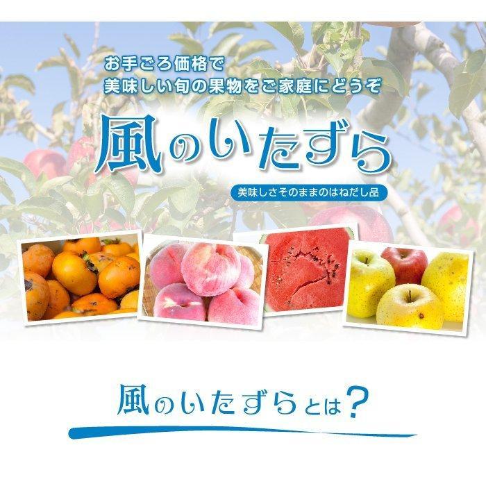 ぶどう シャインマスカット 晴王 風のいたずら ちょっと訳あり 500g×2房 岡山県産 JAおかやま 葡萄 ブドウ hachiya-fruits 02