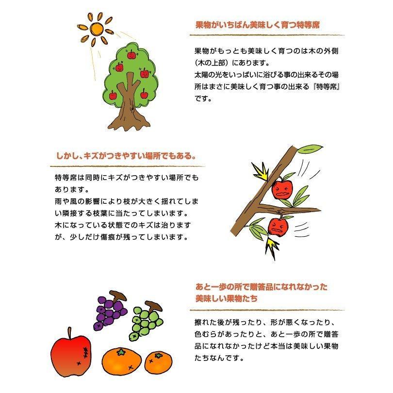 ぶどう シャインマスカット 晴王 風のいたずら ちょっと訳あり 500g×2房 岡山県産 JAおかやま 葡萄 ブドウ hachiya-fruits 03