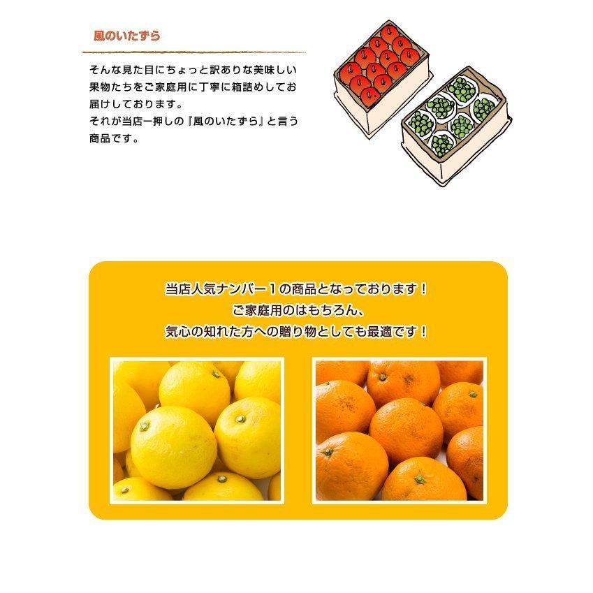 ぶどう シャインマスカット 晴王 風のいたずら ちょっと訳あり 500g×2房 岡山県産 JAおかやま 葡萄 ブドウ hachiya-fruits 04