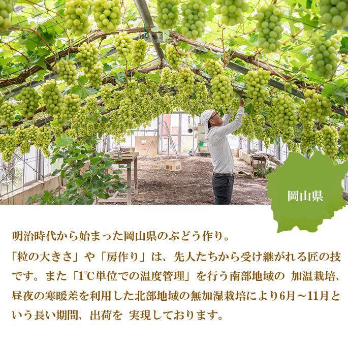 ぶどう シャインマスカット 晴王 風のいたずら ちょっと訳あり 500g×2房 岡山県産 JAおかやま 葡萄 ブドウ hachiya-fruits 06