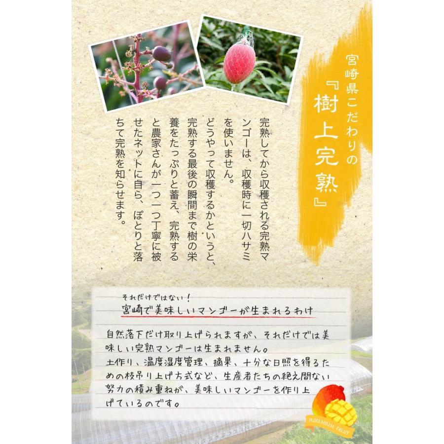 マンゴー 太陽のタマゴ 赤秀 3L 450g以上×2玉 JA宮崎経済連 宮崎県産 完熟マンゴー 太陽のたまご ギフト お取り寄せグルメ 母の日 父の日 hachiya-fruits 05