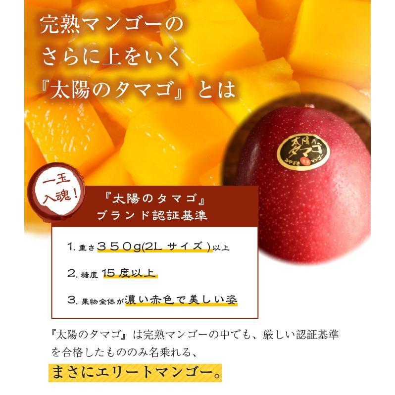 マンゴー 太陽のタマゴ 赤秀 3L 450g以上×2玉 JA宮崎経済連 宮崎県産 完熟マンゴー 太陽のたまご ギフト お取り寄せグルメ 母の日 父の日 hachiya-fruits 06
