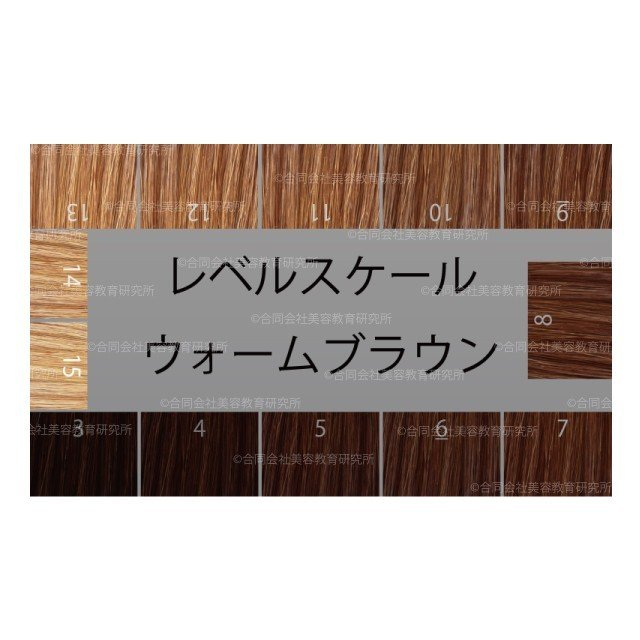 ヘアカラー明度スケール 50枚セット レベルスケール 名刺サイズ両面 3-15レベル 表面:ベーシックブラウン 裏面:ウォームブラウン|hair-color|03
