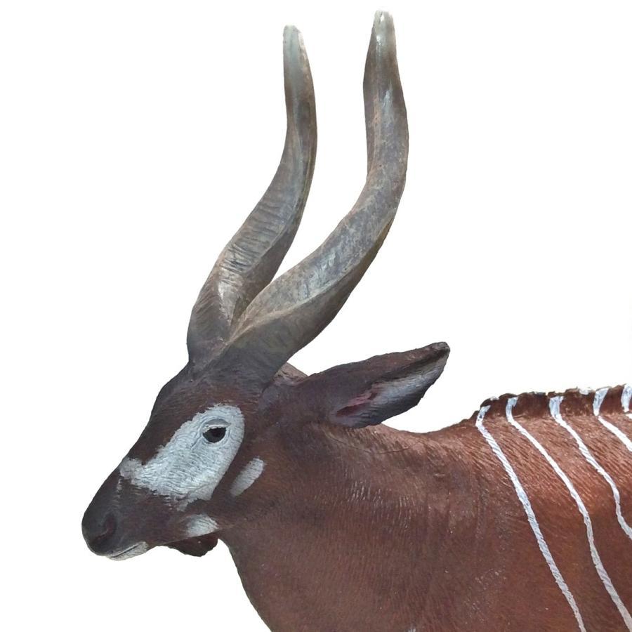 コレクタ/COLLECTA 88809 ボンゴ  動物フィギュア|hakoniwa|04