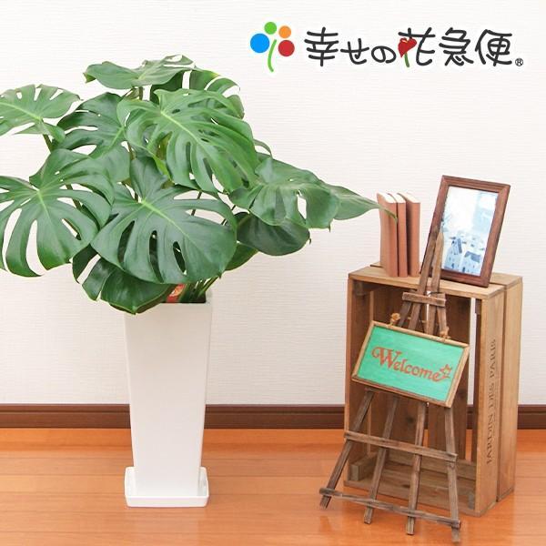 観葉植物 営業 モンステラ7号高陶器-角鉢 新築越祝い 安値 人気