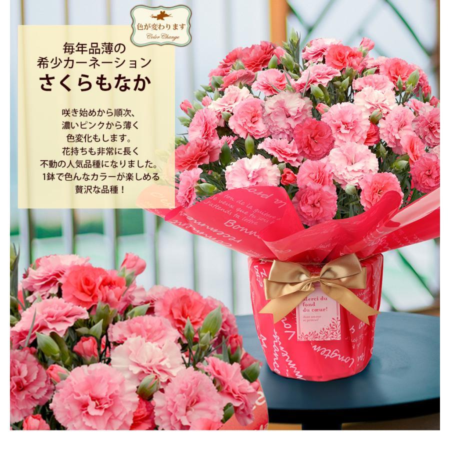 母の日 2021 お花 カーネーション プレゼント 鉢植え ギフト present gift こだわりラッピング|hanamankai|05