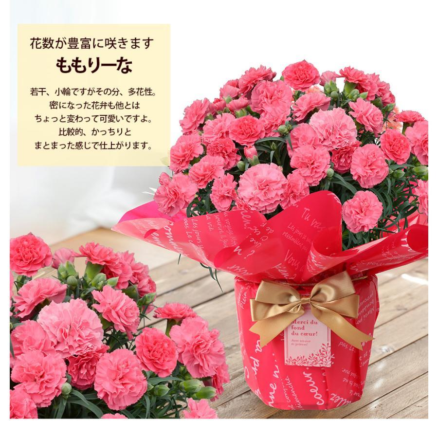 母の日 2021 お花 カーネーション プレゼント 鉢植え ギフト present gift こだわりラッピング|hanamankai|07