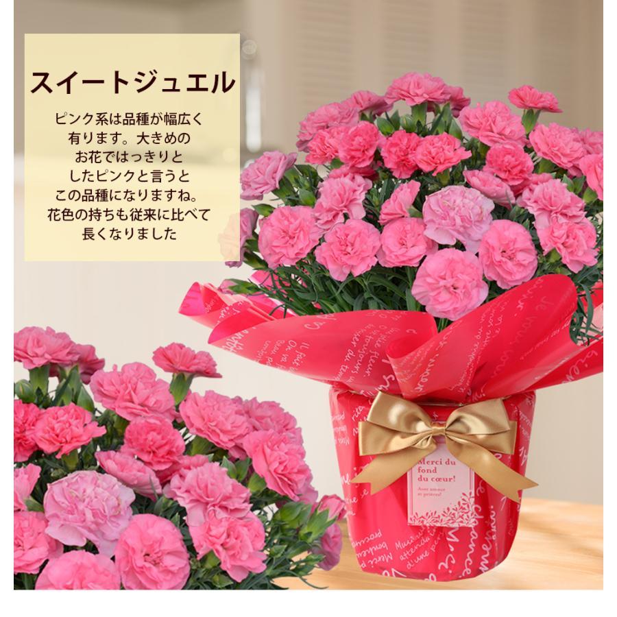 母の日 2021 お花 カーネーション プレゼント 鉢植え ギフト present gift こだわりラッピング|hanamankai|08