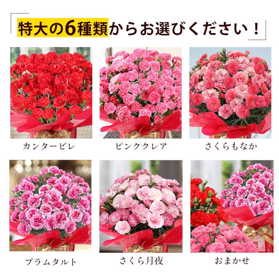 母の日カーネーション6号 鉢植え 花 2021 ギフト プレゼント 大きい おしゃれ プレミアム gift present 選べる7種類|hanamankai|02