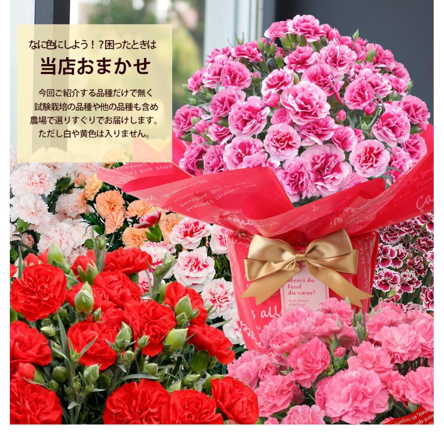 母の日カーネーション6号 鉢植え 花 2021 ギフト プレゼント 大きい おしゃれ プレミアム gift present 選べる7種類|hanamankai|13