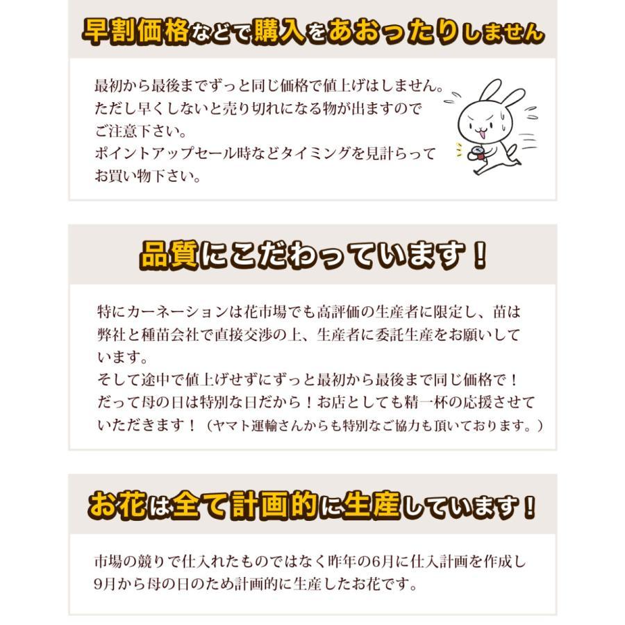 母の日カーネーション6号 鉢植え 花 2021 ギフト プレゼント 大きい おしゃれ プレミアム gift present 選べる7種類|hanamankai|04