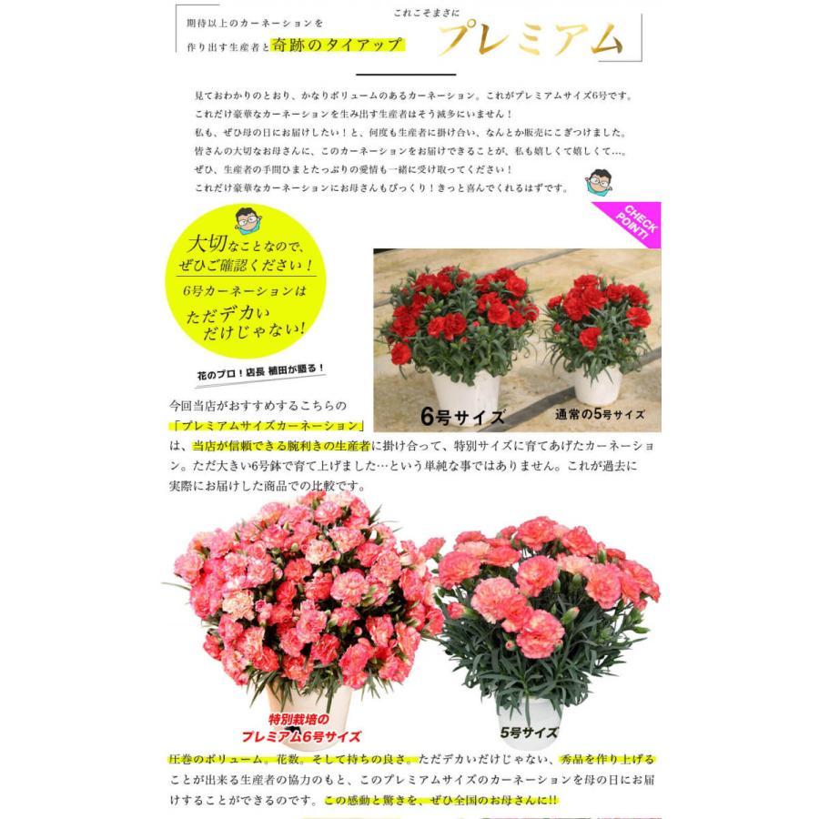 母の日カーネーション6号 鉢植え 花 2021 ギフト プレゼント 大きい おしゃれ プレミアム gift present 選べる7種類|hanamankai|05