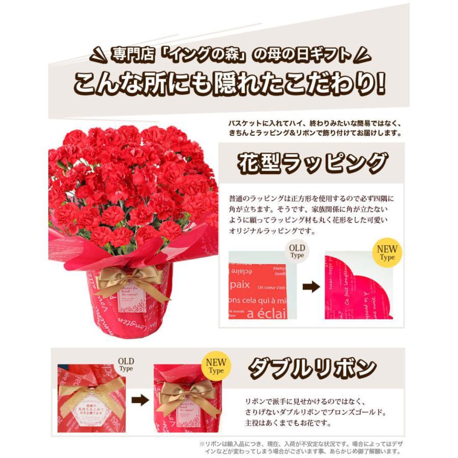 母の日カーネーション6号 鉢植え 花 2021 ギフト プレゼント 大きい おしゃれ プレミアム gift present 選べる7種類|hanamankai|08