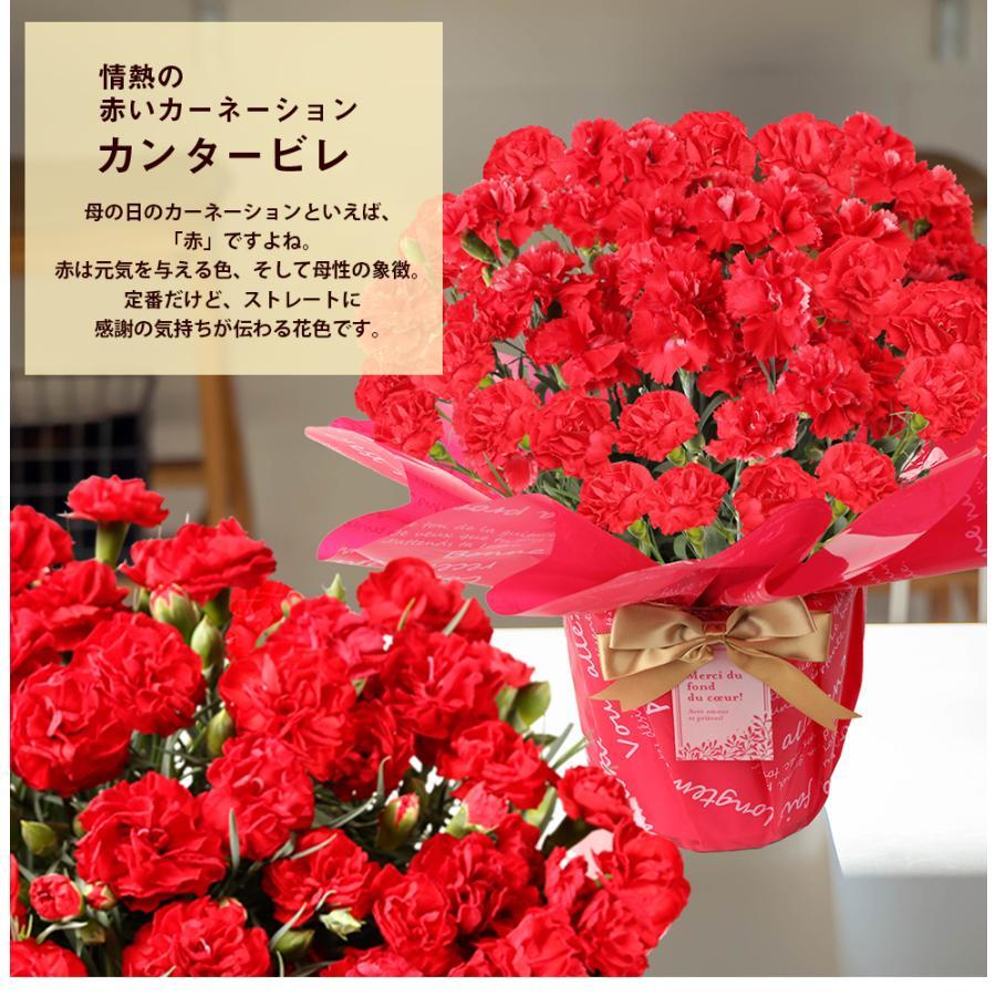 母の日カーネーション6号 鉢植え 花 2021 ギフト プレゼント 大きい おしゃれ プレミアム gift present 選べる7種類|hanamankai|09