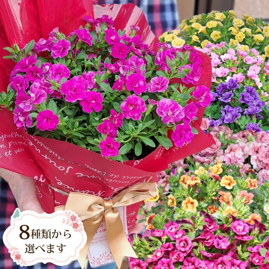 母の日 花 2021 鉢植え プレゼント present ギフト 人気の選べるお花マーガレット ジャスミン ラベンダー クチナシ等|hanamankai