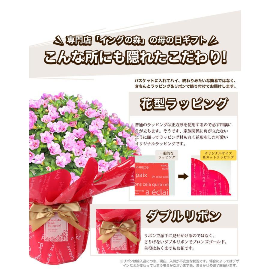 母の日 花 2021 鉢植え プレゼント present ギフト 人気の選べるお花マーガレット ジャスミン ラベンダー クチナシ等|hanamankai|05