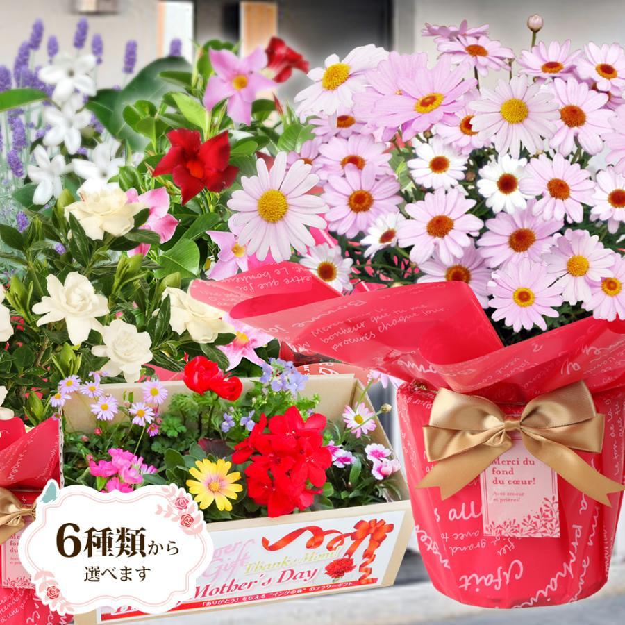 母の日 2021 花 プレゼント present 鉢植え ギフト カーネーション マンデビラ gift こだわりラッピング|hanamankai