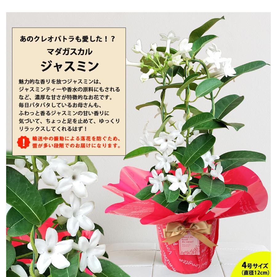 母の日 2021 花 プレゼント present 鉢植え ギフト カーネーション マンデビラ gift こだわりラッピング|hanamankai|11