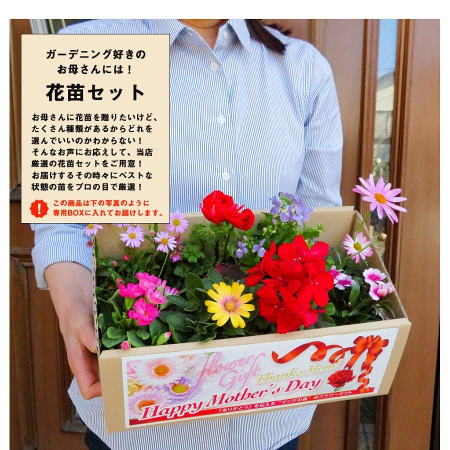 母の日 2021 花 プレゼント present 鉢植え ギフト カーネーション マンデビラ gift こだわりラッピング|hanamankai|13
