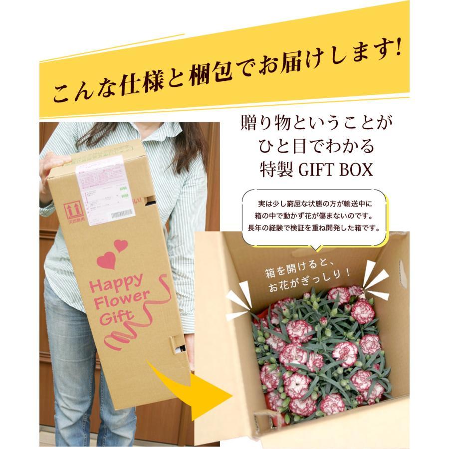母の日 2021 花 プレゼント present 鉢植え ギフト カーネーション マンデビラ gift こだわりラッピング|hanamankai|04