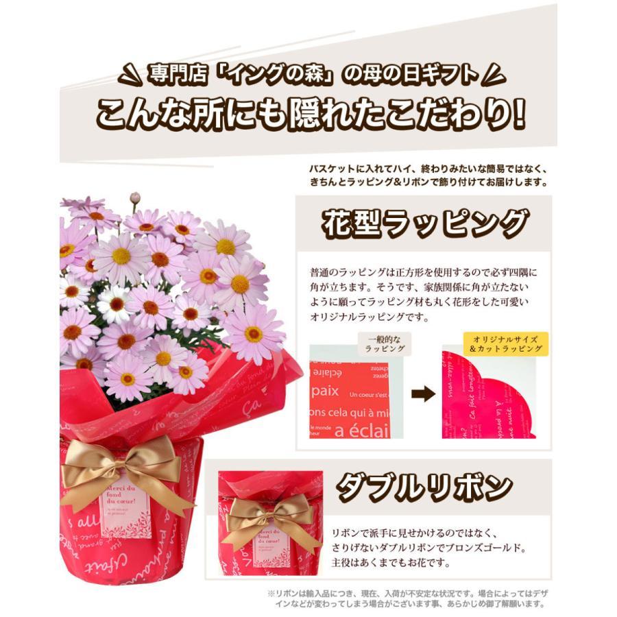 母の日 2021 花 プレゼント present 鉢植え ギフト カーネーション マンデビラ gift こだわりラッピング|hanamankai|05
