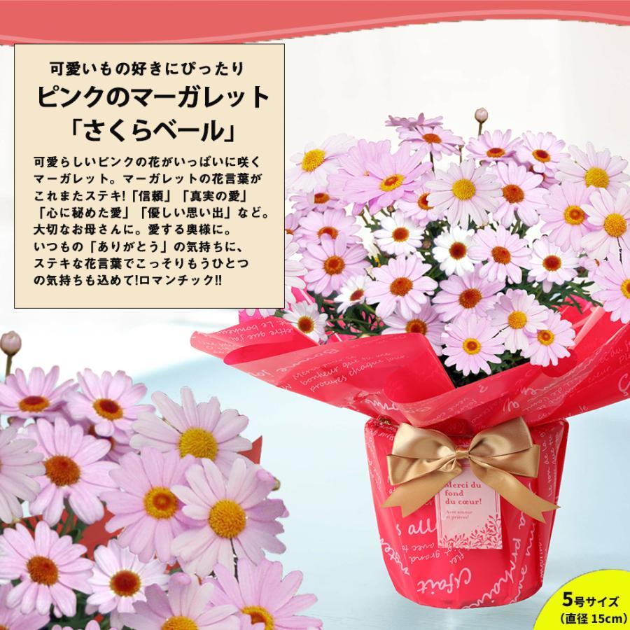 母の日 2021 花 プレゼント present 鉢植え ギフト カーネーション マンデビラ gift こだわりラッピング|hanamankai|07
