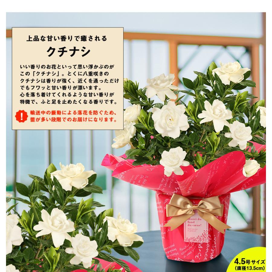 母の日 2021 花 プレゼント present 鉢植え ギフト カーネーション マンデビラ gift こだわりラッピング|hanamankai|08