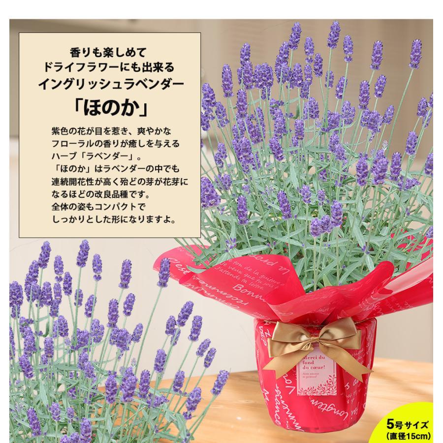 母の日 2021 花 プレゼント present 鉢植え ギフト カーネーション マンデビラ gift こだわりラッピング|hanamankai|09