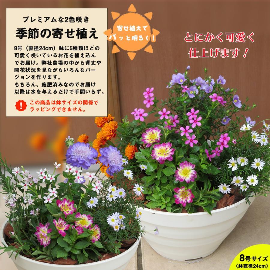 母の日 2021 花 鉢植え プレゼントpresent  ギフト 選べるお花 おしゃれ ベゴニア ブーゲンビリア クレマチス こだわりラッピング|hanamankai|12