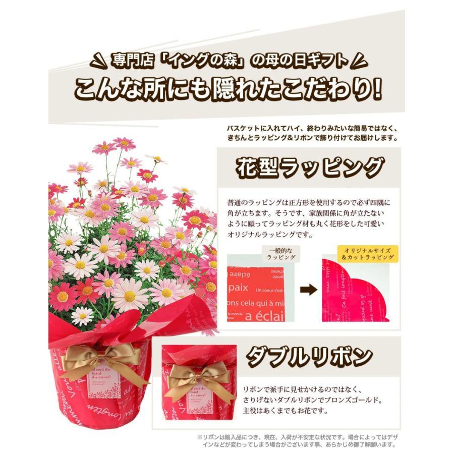母の日 2021 花 鉢植え プレゼントpresent  ギフト 選べるお花 おしゃれ ベゴニア ブーゲンビリア クレマチス こだわりラッピング|hanamankai|06