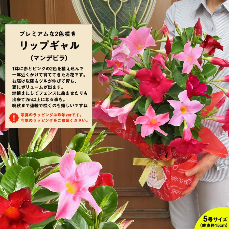 母の日 2021 花 鉢植え プレゼントpresent  ギフト 選べるお花 おしゃれ ベゴニア ブーゲンビリア クレマチス こだわりラッピング|hanamankai|08