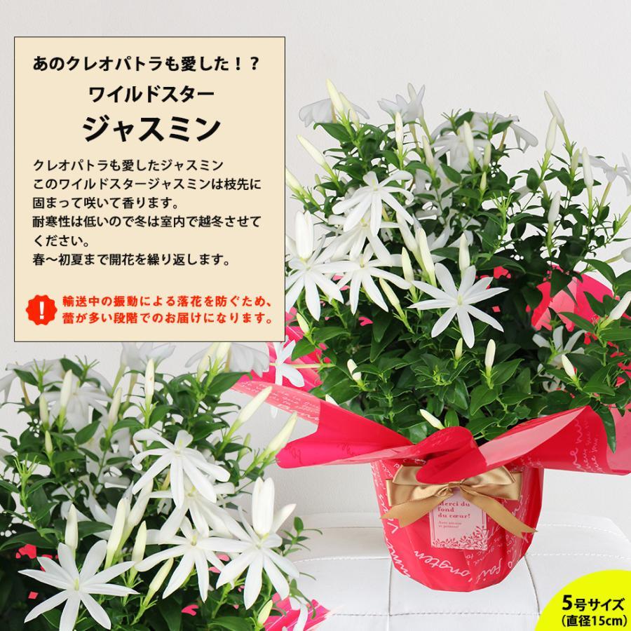 母の日 2021 花 鉢植え プレゼントpresent  ギフト 選べるお花 おしゃれ ベゴニア ブーゲンビリア クレマチス こだわりラッピング|hanamankai|09