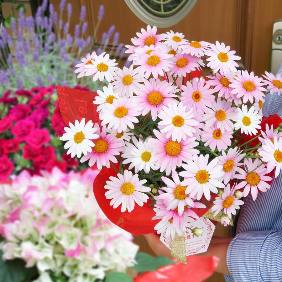 品質保証 鉢花 ギフト おしゃれ プレゼント 人気 おすすめ お花を贈ろう 2680円コース 季節の花を可愛くラッピング リボン 卒業 メッセージを添えてお届けします お祝い 入学 誕生日